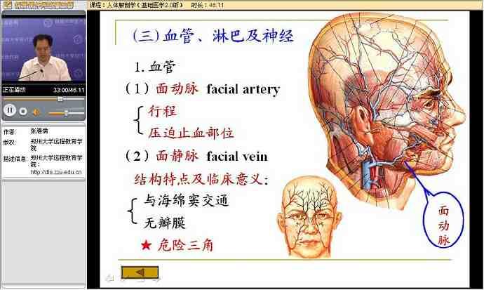 人体解剖学_人体解剖学视频教程 23讲 郑州大学 基础医学